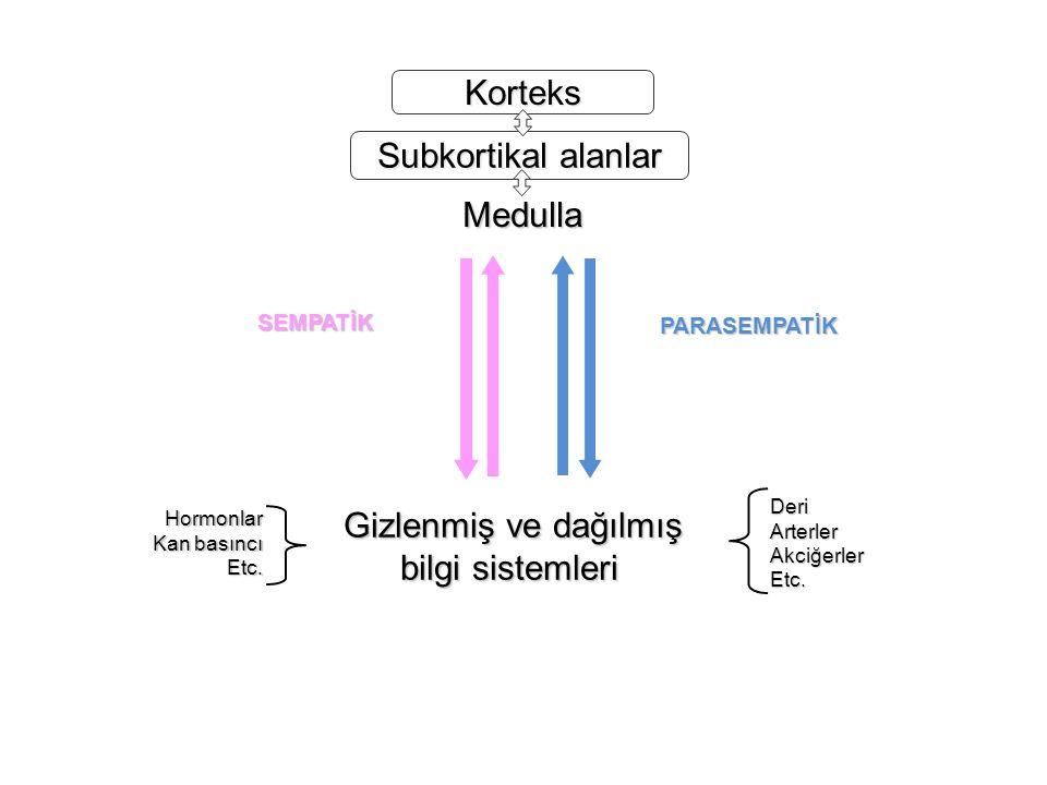 Korteks Subkortikal alanlar Medulla Gizlenmiş ve dağılmış