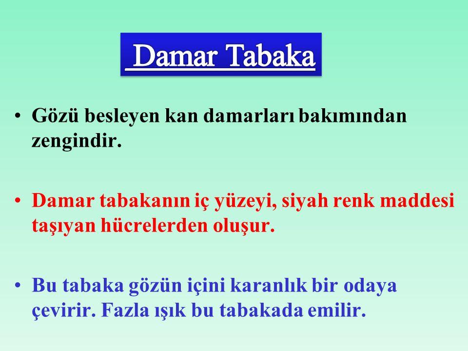 Damar Tabaka Gözü besleyen kan damarları bakımından zengindir.