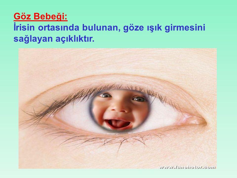 Göz Bebeği: İrisin ortasında bulunan, göze ışık girmesini sağlayan açıklıktır.