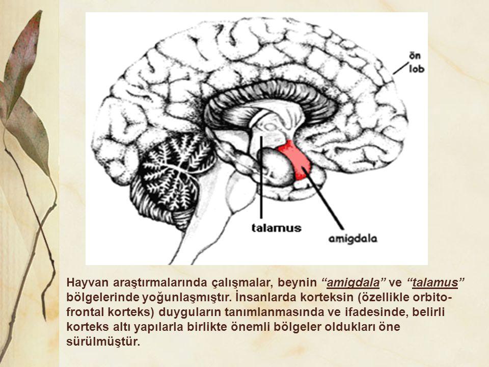 Hayvan araştırmalarında çalışmalar, beynin amigdala ve talamus