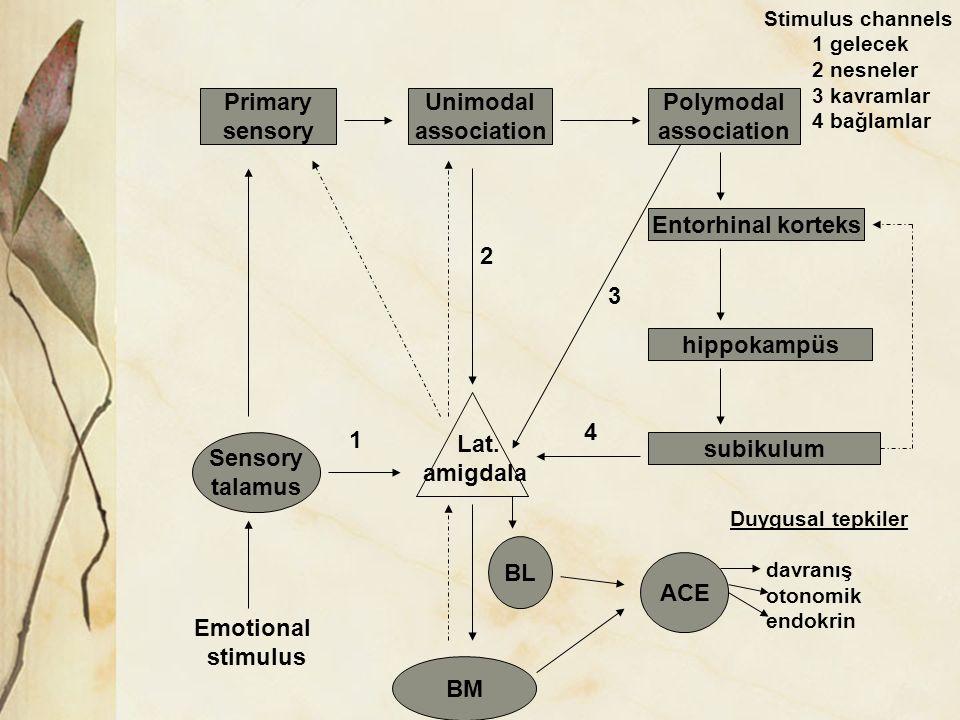 Primary sensory Unimodal association Polymodal association