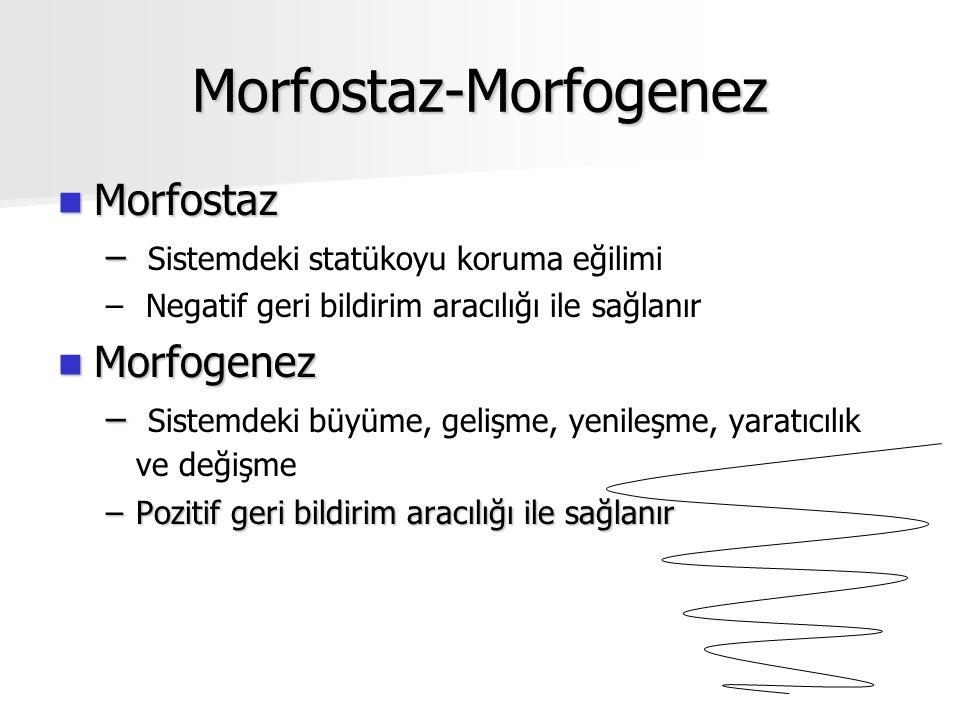 Morfostaz-Morfogenez