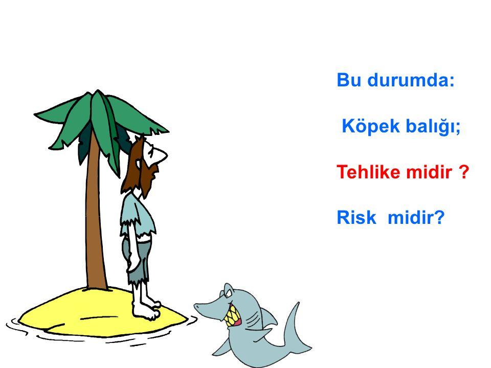 Bu durumda: Köpek balığı; Tehlike midir Risk midir