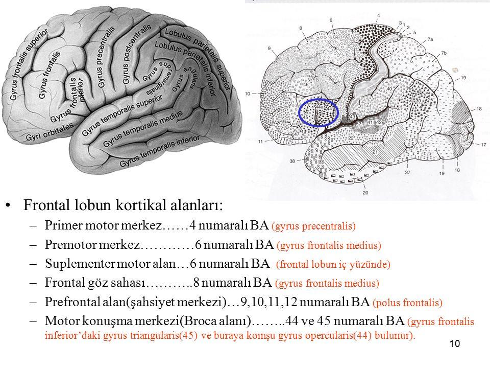 a Frontal lobun kortikal alanları: