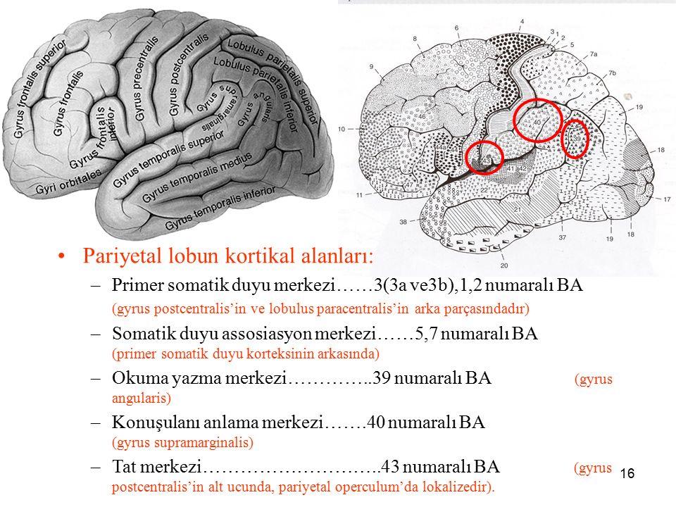 a Pariyetal lobun kortikal alanları: