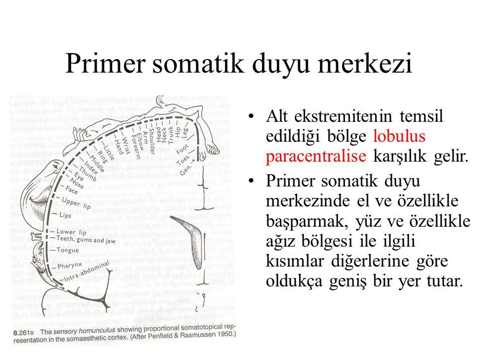 Primer somatik duyu merkezi