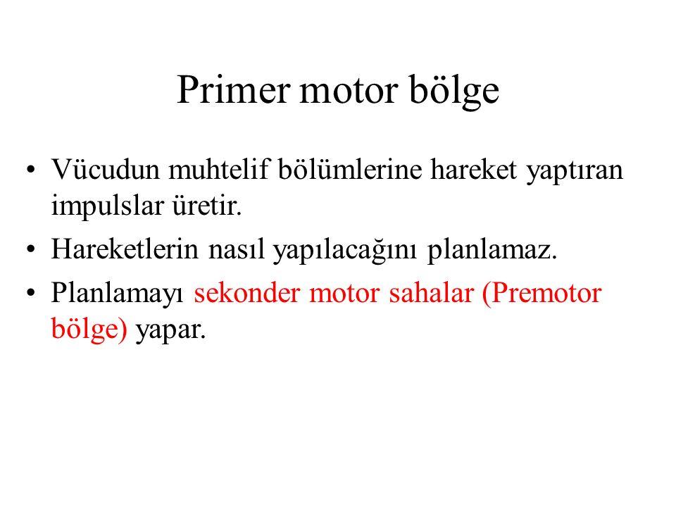 Primer motor bölge Vücudun muhtelif bölümlerine hareket yaptıran impulslar üretir. Hareketlerin nasıl yapılacağını planlamaz.