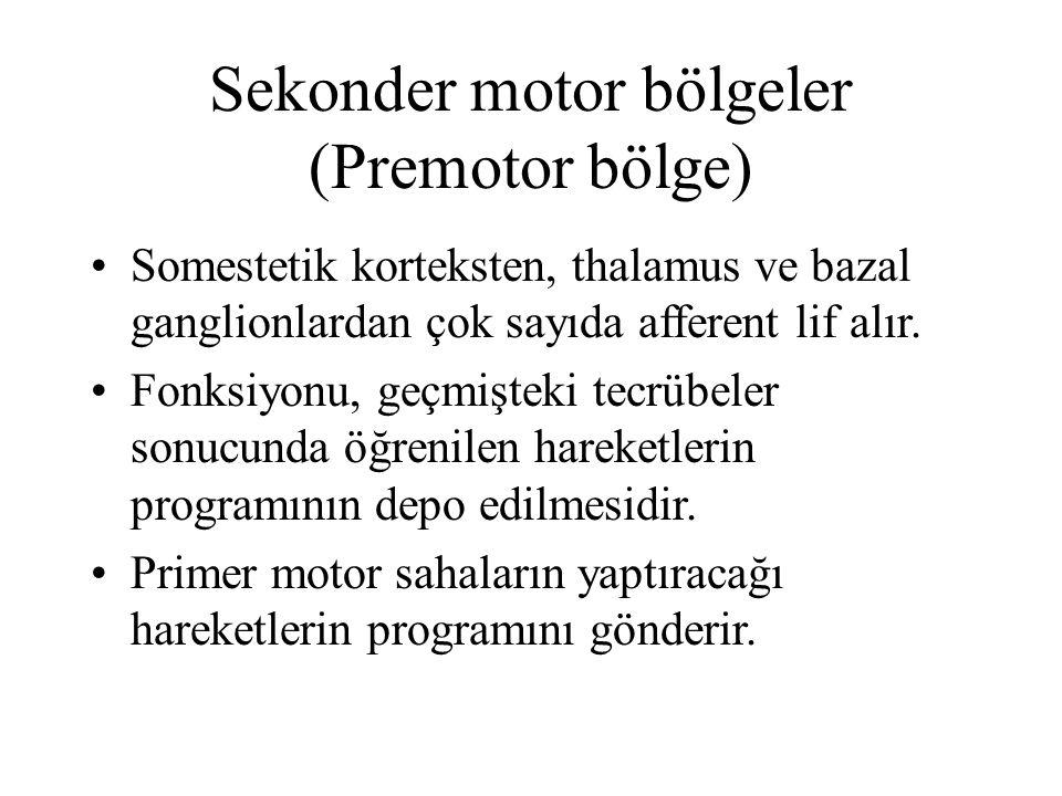 Sekonder motor bölgeler (Premotor bölge)