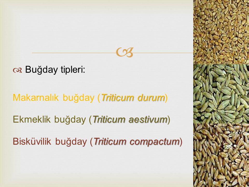 Buğday tipleri: Makarnalık buğday (Triticum durum) Ekmeklik buğday (Triticum aestivum) Bisküvilik buğday (Triticum compactum)