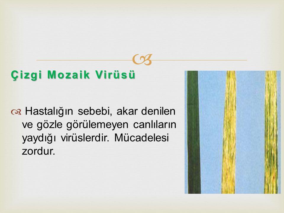 Çizgi Mozaik Virüsü Hastalığın sebebi, akar denilen ve gözle görülemeyen canlıların yaydığı virüslerdir.