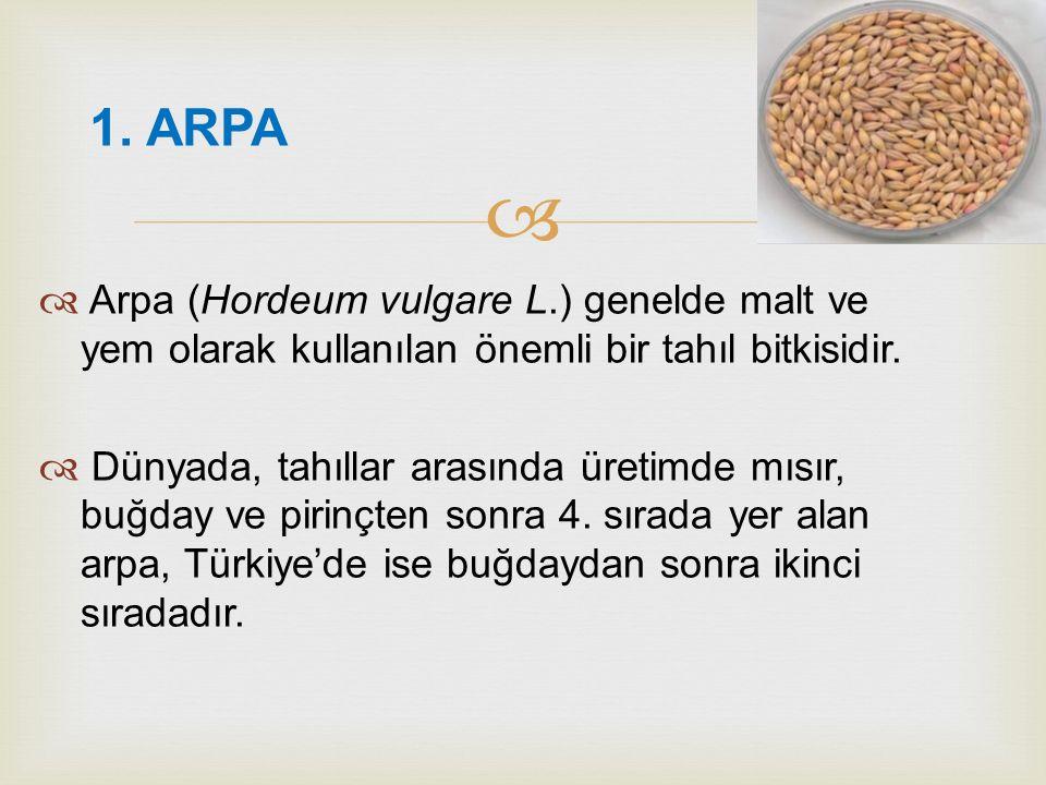 1. ARPA Arpa (Hordeum vulgare L.) genelde malt ve yem olarak kullanılan önemli bir tahıl bitkisidir.