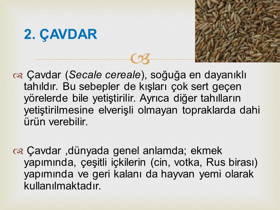 2. ÇAVDAR