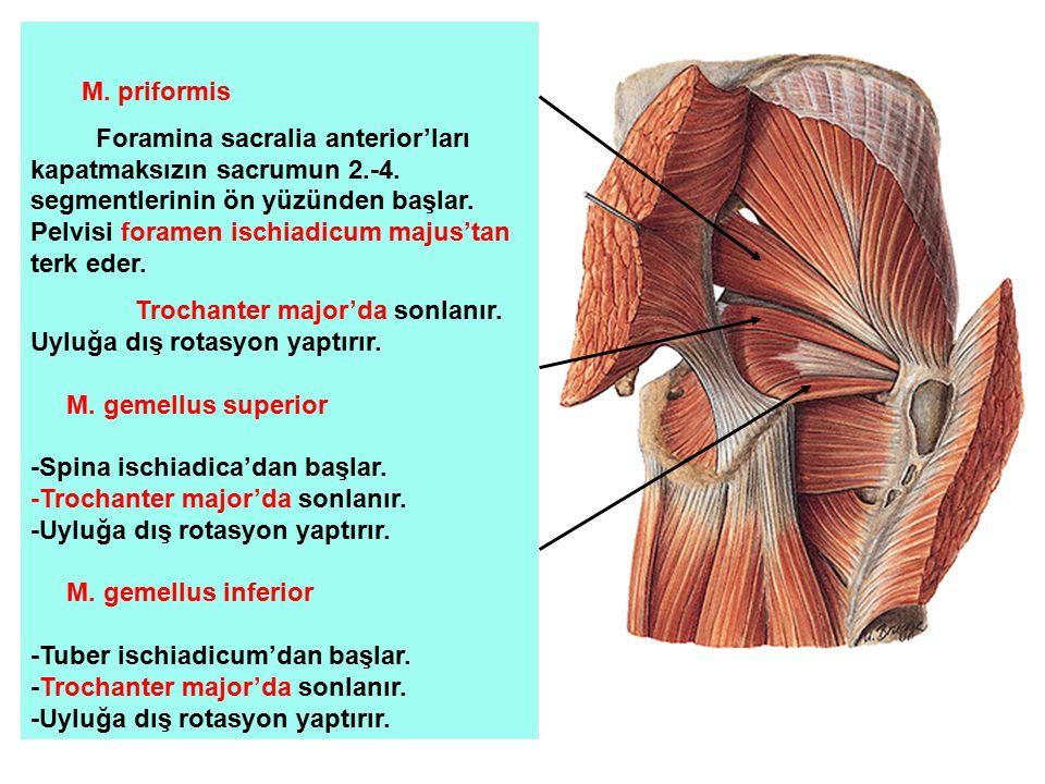 M. priformis