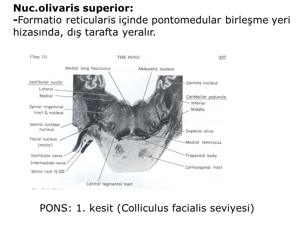Nuc.olivaris superior: