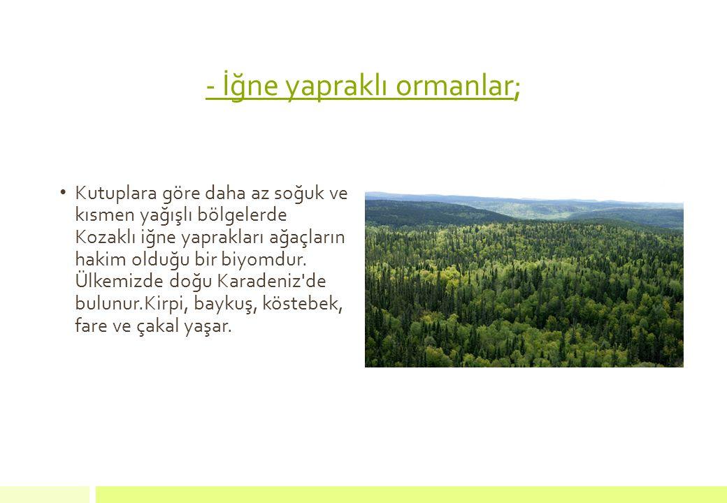 - İğne yapraklı ormanlar;