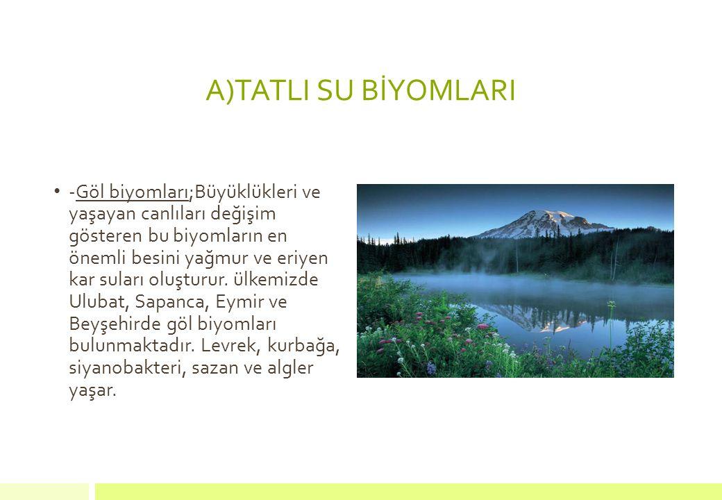 A)TATLI SU BİYOMLARI
