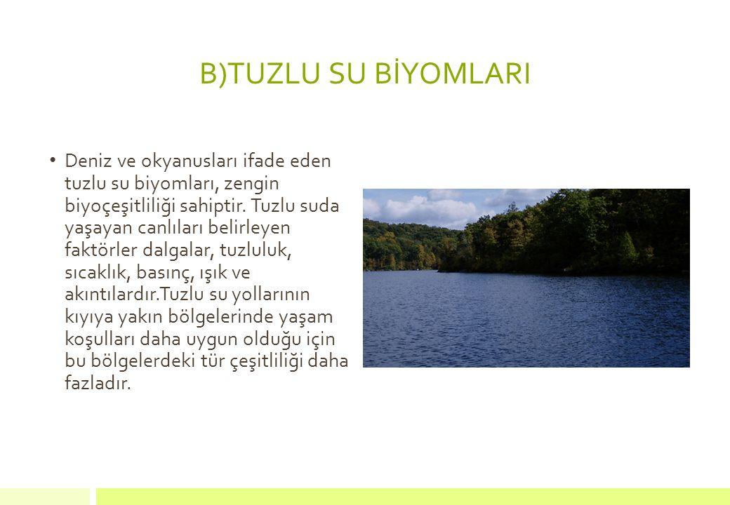 B)TUZLU SU BİYOMLARI