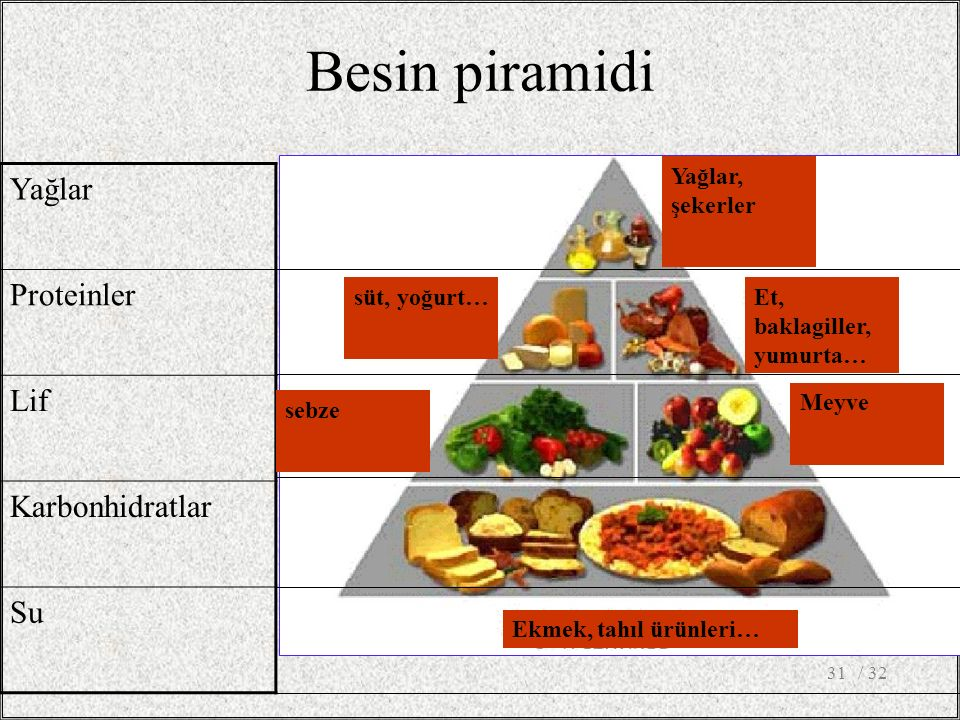 Besin piramidi Yağlar Proteinler Lif Karbonhidratlar Su