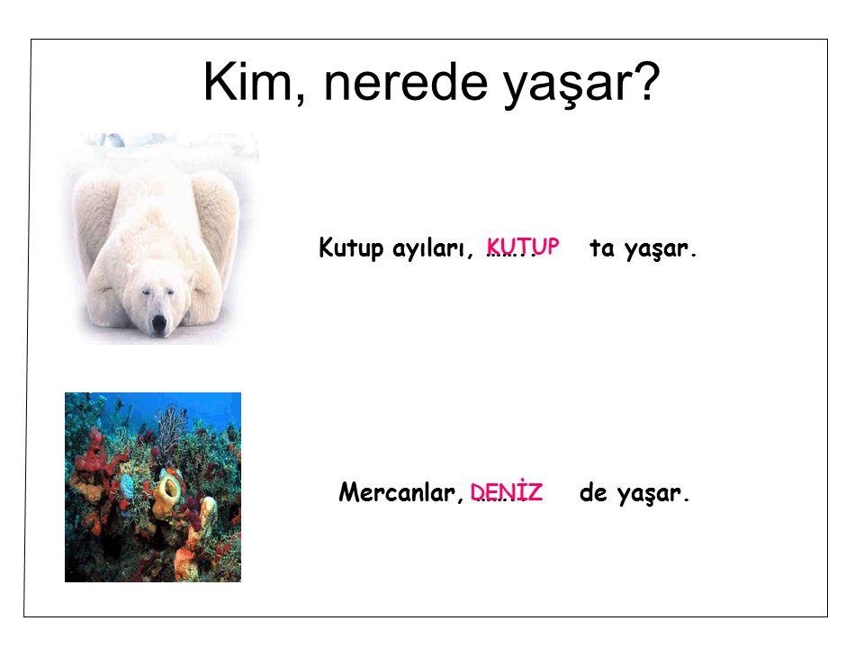 Kim, nerede yaşar Kutup ayıları, …….. ta yaşar.