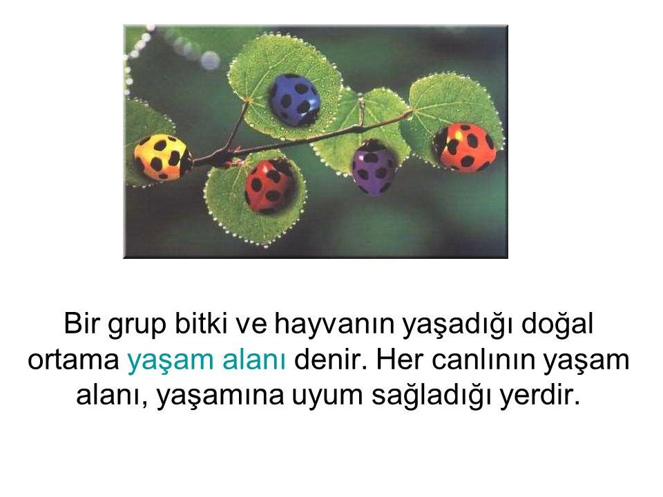 Bir grup bitki ve hayvanın yaşadığı doğal ortama yaşam alanı denir
