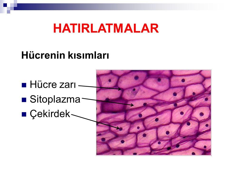 HATIRLATMALAR Hücrenin kısımları Hücre zarı Sitoplazma Çekirdek