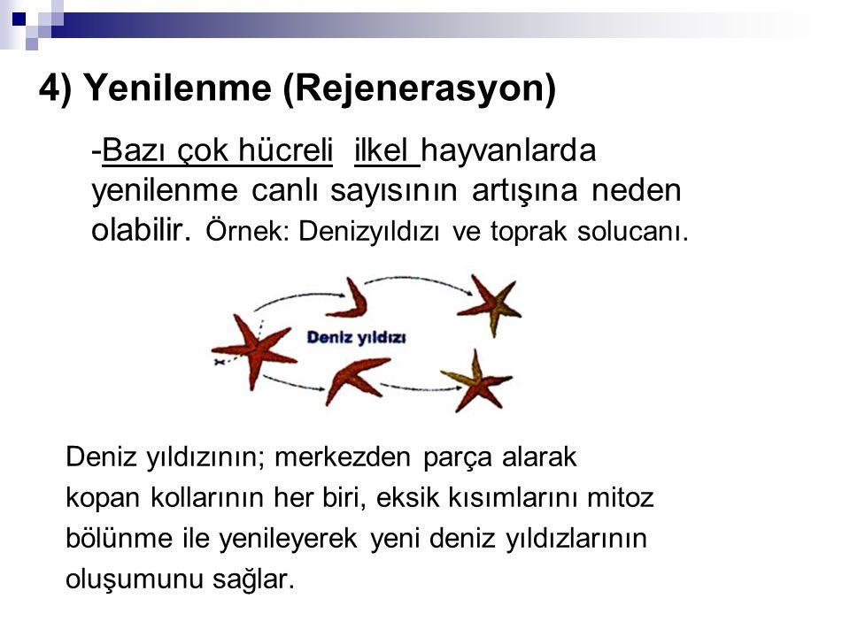 4) Yenilenme (Rejenerasyon)