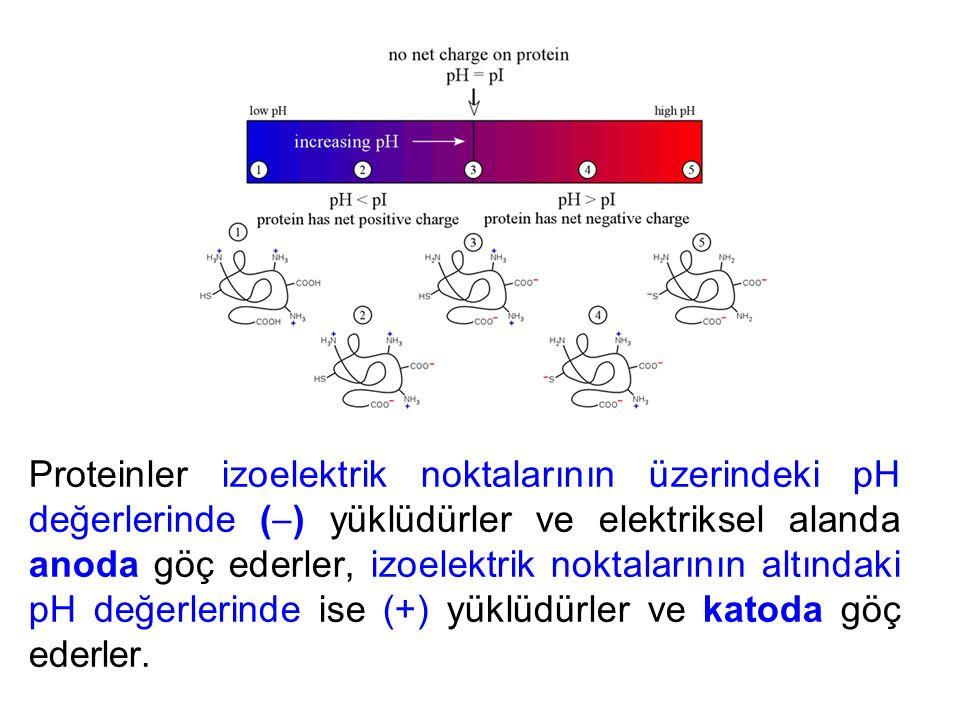 Proteinler izoelektrik noktalarının üzerindeki pH değerlerinde () yüklüdürler ve elektriksel alanda anoda göç ederler, izoelektrik noktalarının altındaki pH değerlerinde ise (+) yüklüdürler ve katoda göç ederler.