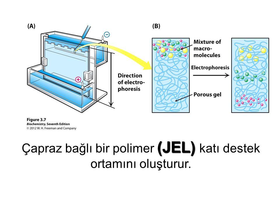 Çapraz bağlı bir polimer (JEL) katı destek ortamını oluşturur.