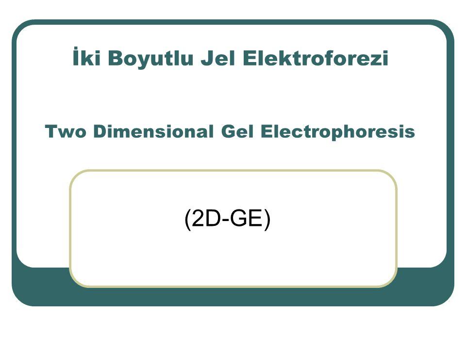 İki Boyutlu Jel Elektroforezi Two Dimensional Gel Electrophoresis