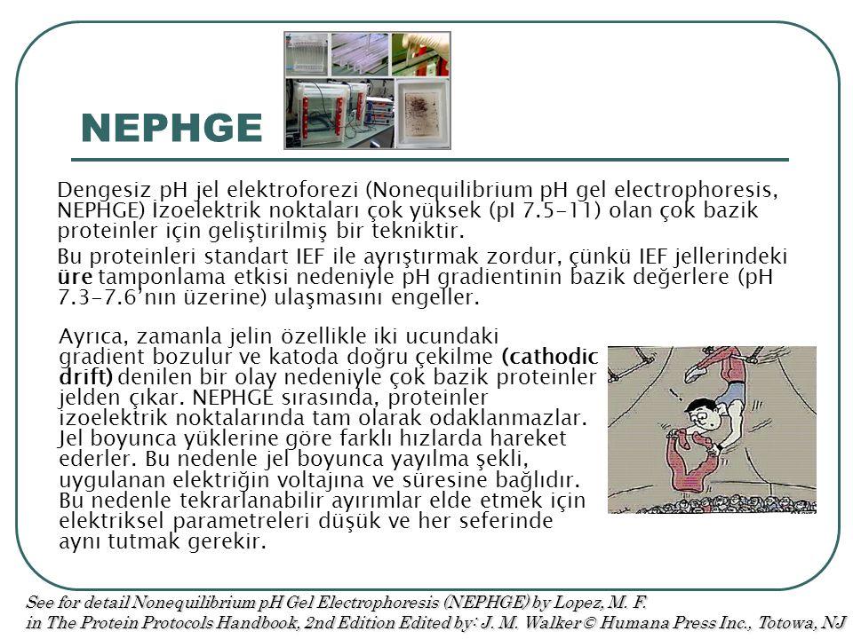 NEPHGE