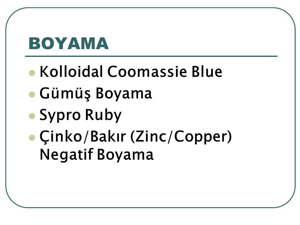 BOYAMA Kolloidal Coomassie Blue Gümüş Boyama Sypro Ruby