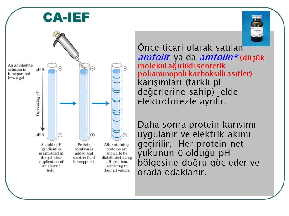 CA-IEF