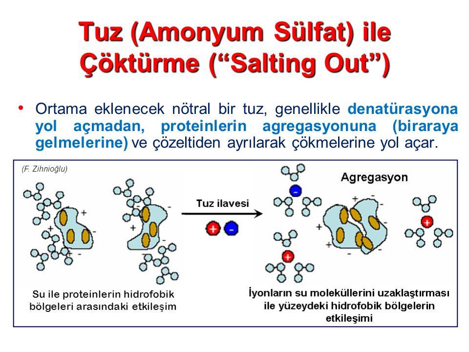 Tuz (Amonyum Sülfat) ile Çöktürme ( Salting Out )