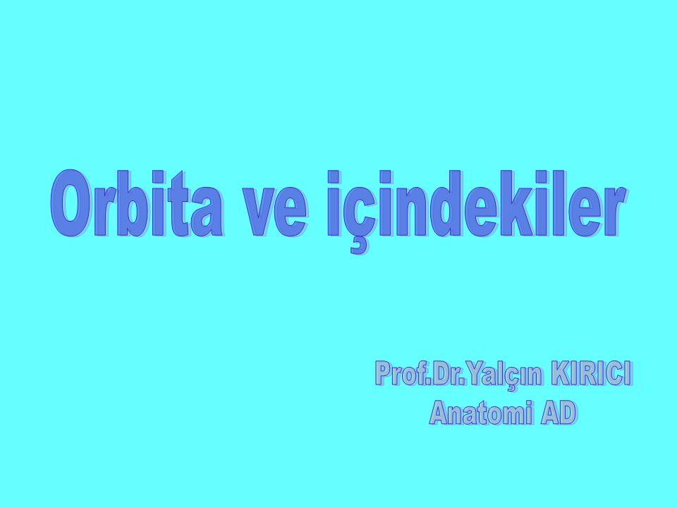 Orbita ve içindekiler Prof.Dr.Yalçın KIRICI Anatomi AD