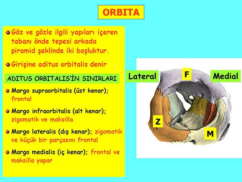 ORBITA F Lateral Medial Z M