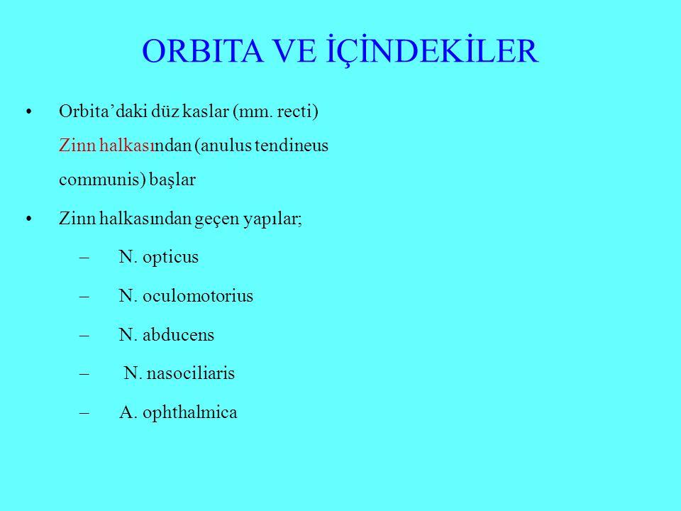 ORBITA VE İÇİNDEKİLER Orbita'daki düz kaslar (mm. recti) Zinn halkasından (anulus tendineus communis) başlar.