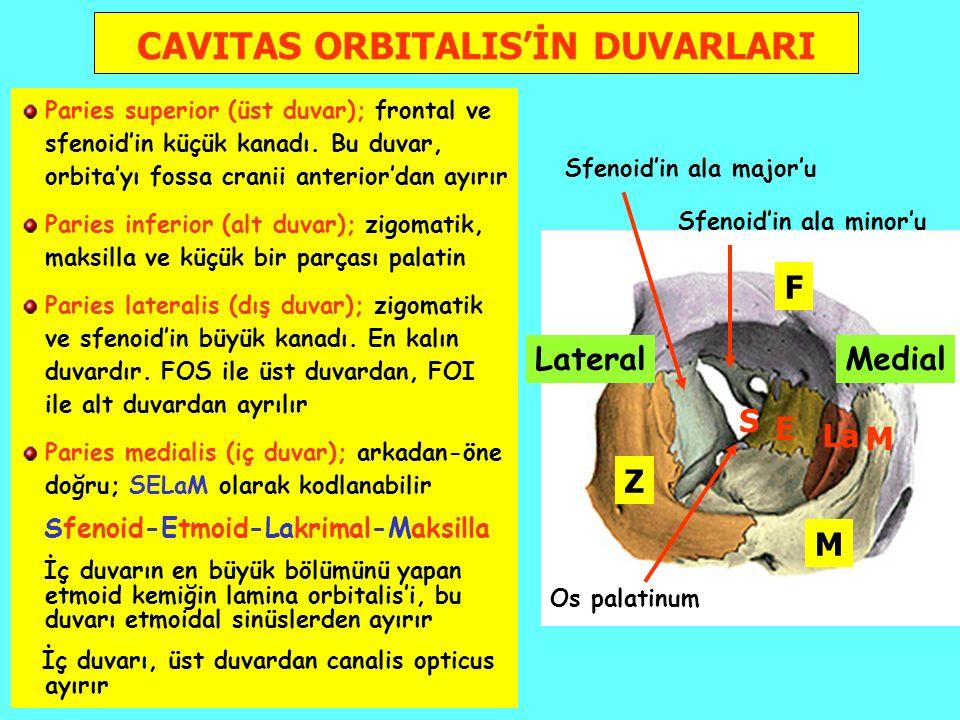 CAVITAS ORBITALIS'İN DUVARLARI