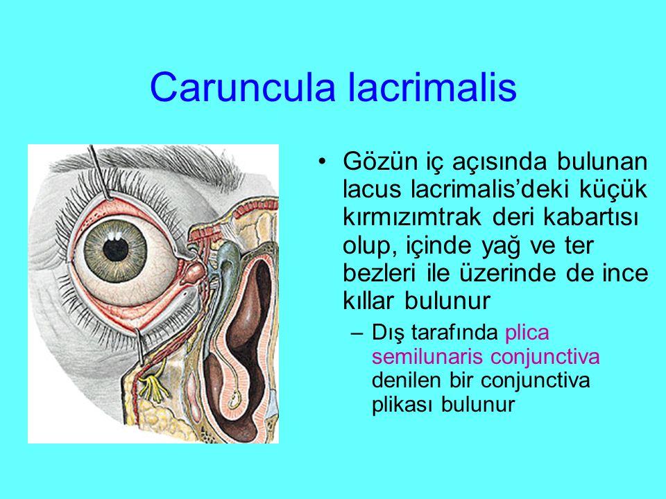 Caruncula lacrimalis