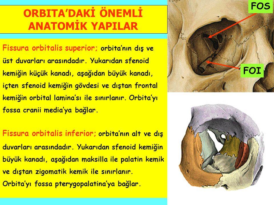 ORBITA'DAKİ ÖNEMLİ ANATOMİK YAPILAR