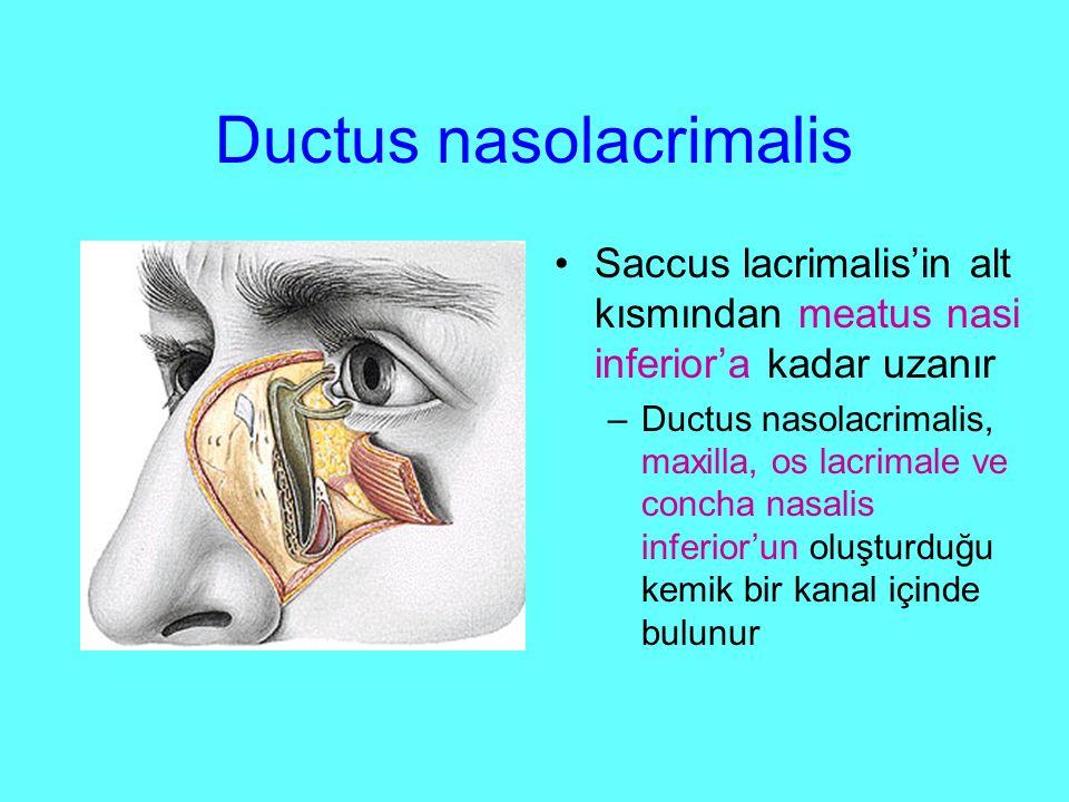 Ductus nasolacrimalis