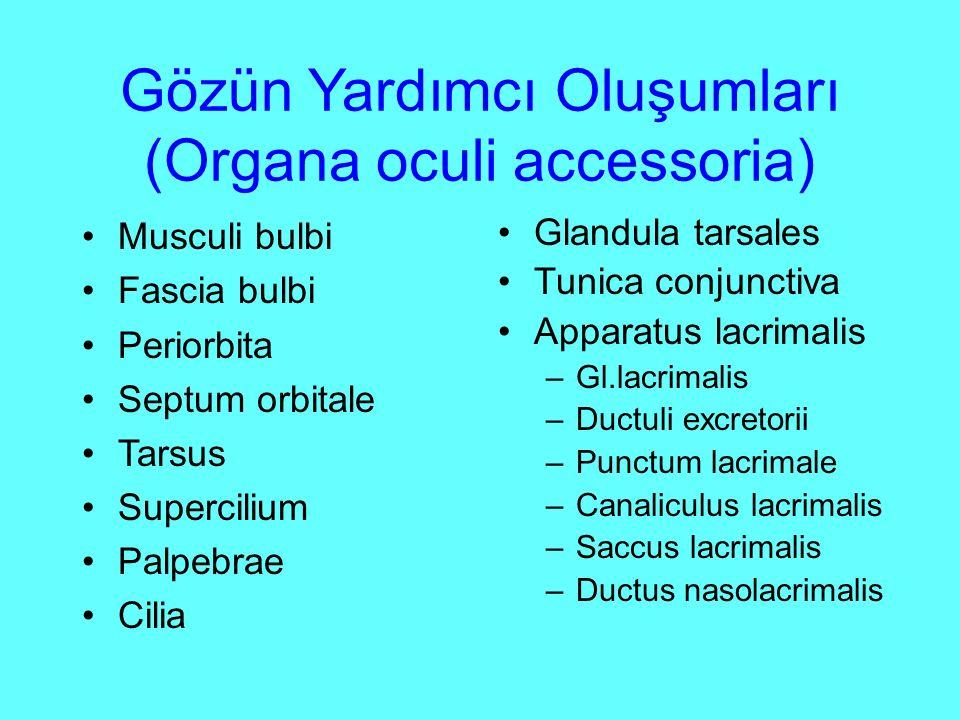 Gözün Yardımcı Oluşumları (Organa oculi accessoria)