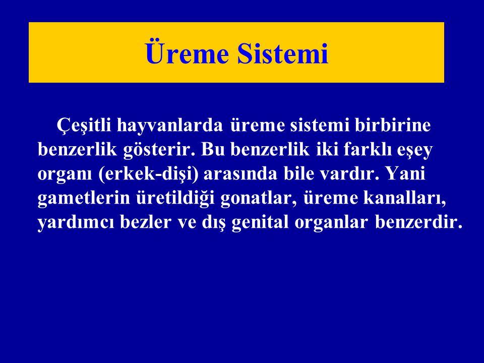 Üreme Sistemi