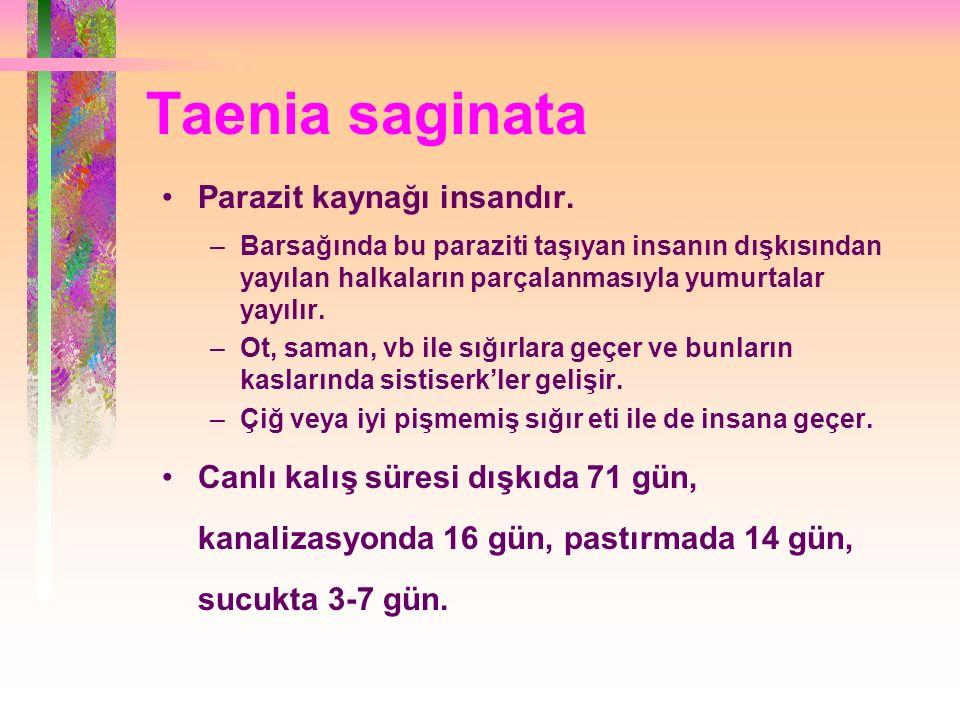 Taenia saginata Parazit kaynağı insandır.