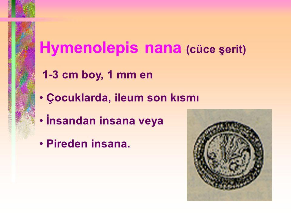 Hymenolepis nana (cüce şerit)