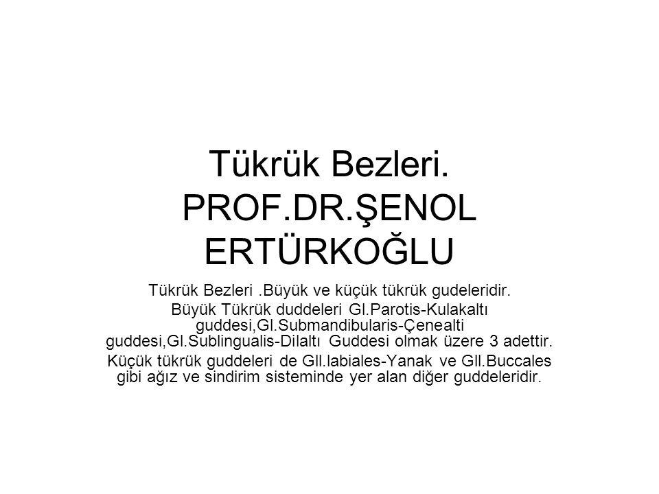 Tükrük Bezleri. PROF.DR.ŞENOL ERTÜRKOĞLU