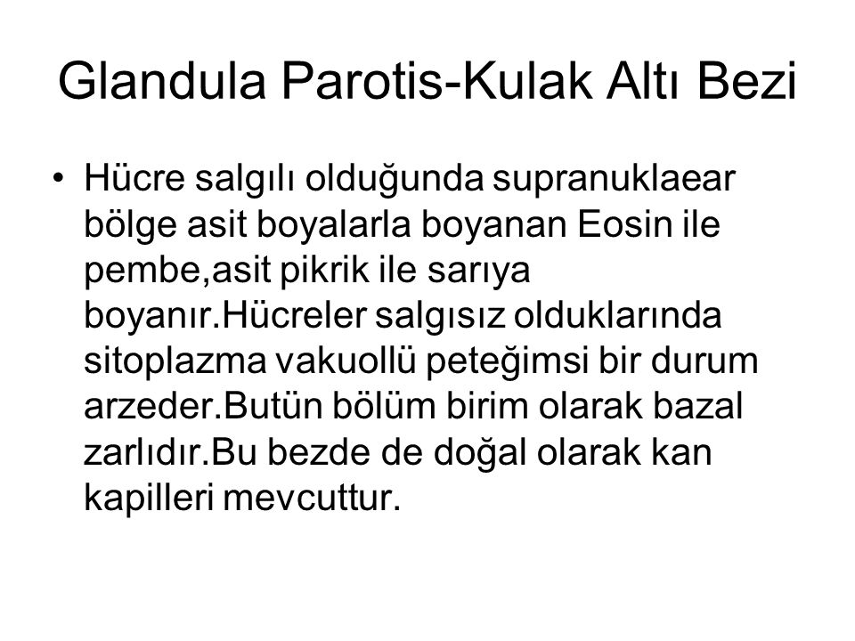 Glandula Parotis-Kulak Altı Bezi