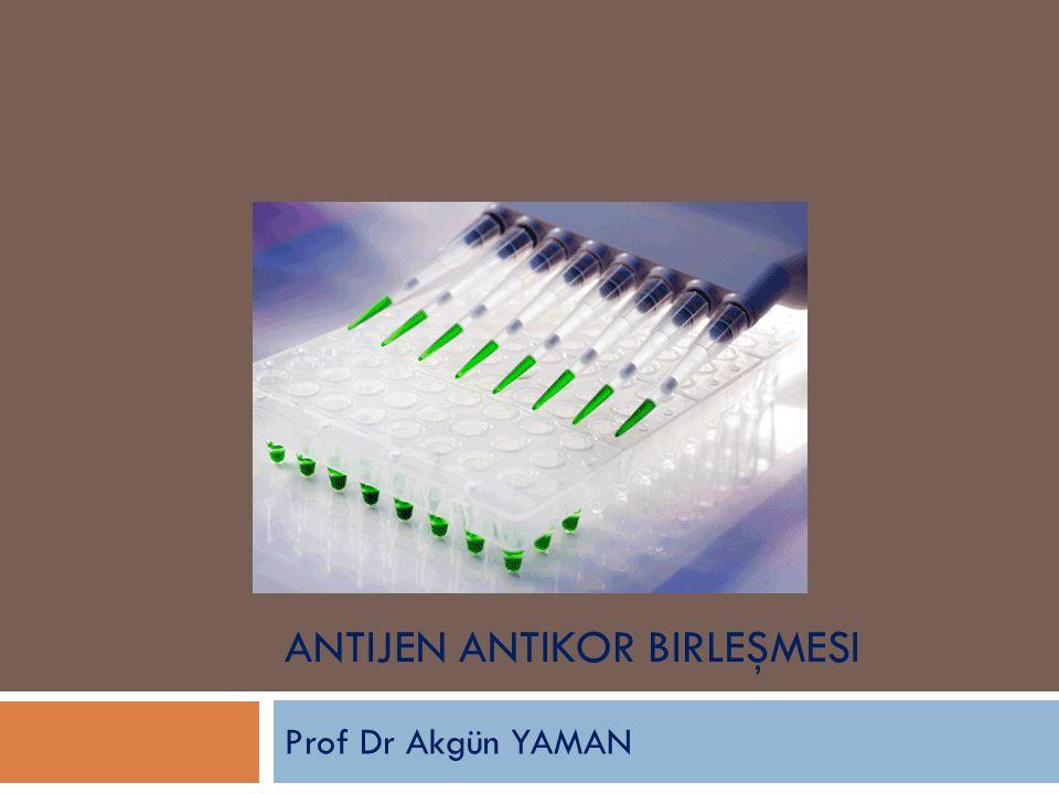 Antijen Antikor Birleşmesi