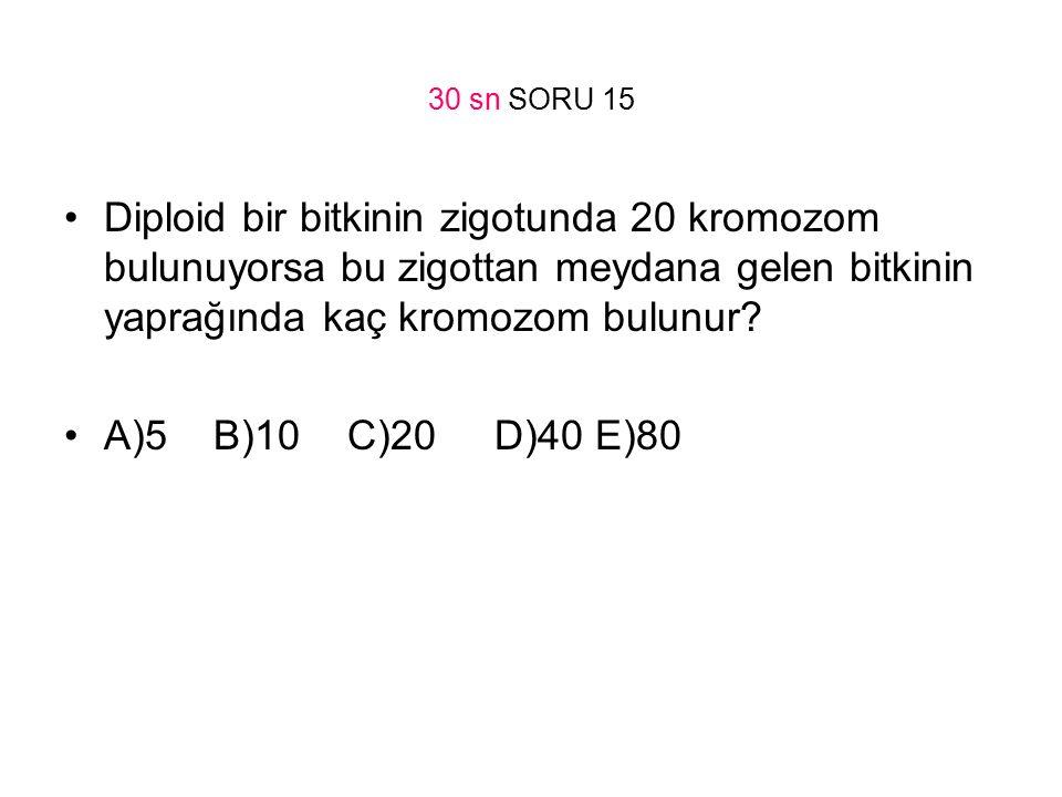 30 sn SORU 15 Diploid bir bitkinin zigotunda 20 kromozom bulunuyorsa bu zigottan meydana gelen bitkinin yaprağında kaç kromozom bulunur