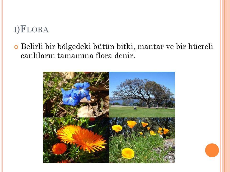 i)Flora Belirli bir bölgedeki bütün bitki, mantar ve bir hücreli canlıların tamamına flora denir.
