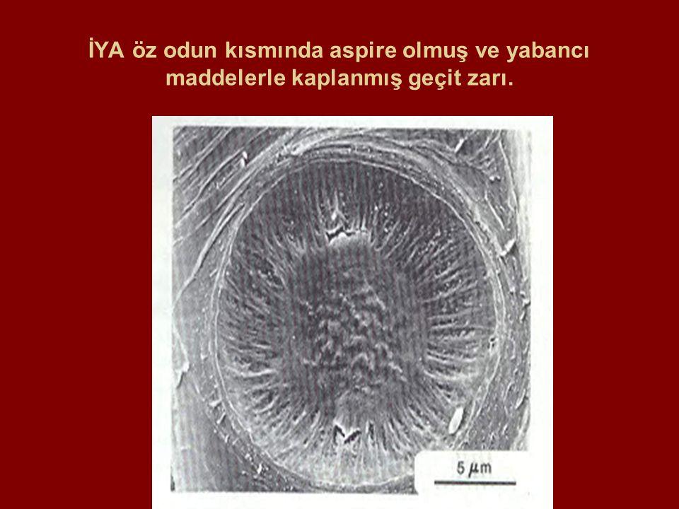 İYA öz odun kısmında aspire olmuş ve yabancı maddelerle kaplanmış geçit zarı.